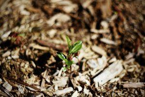 Hogyan lehet gyommentes a kerted